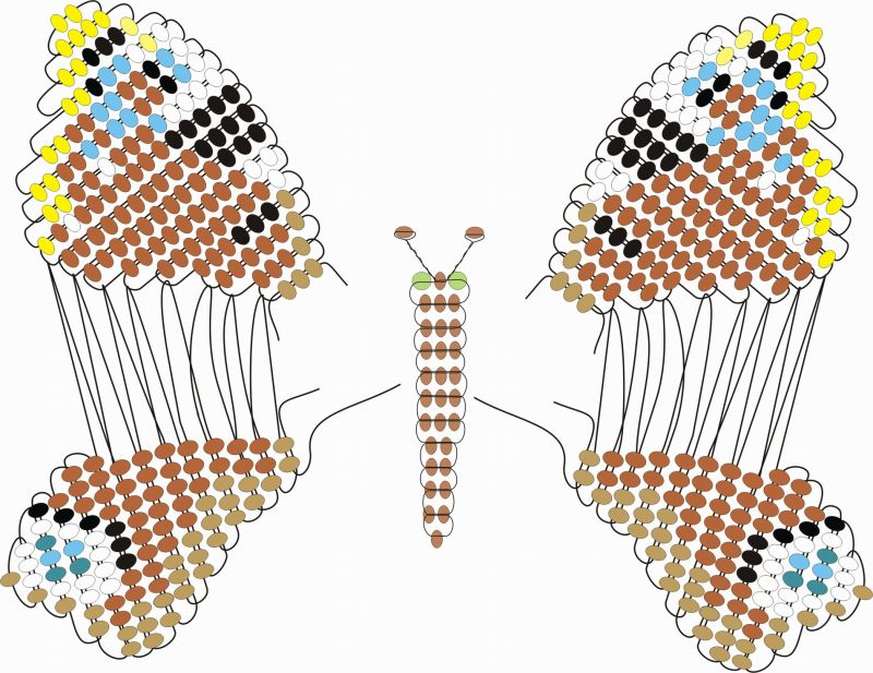 Схема плетения бабочек из бисера2.  Нижнее крылышко бабочки плетется аналогично по схеме.